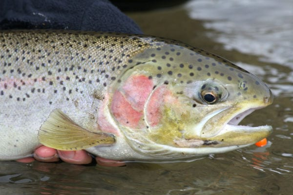 Steelhead Alley Fly Fishing