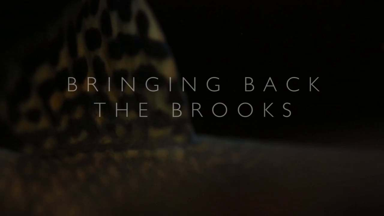 [Video] Return of the Southern Appalachian Brook Trout