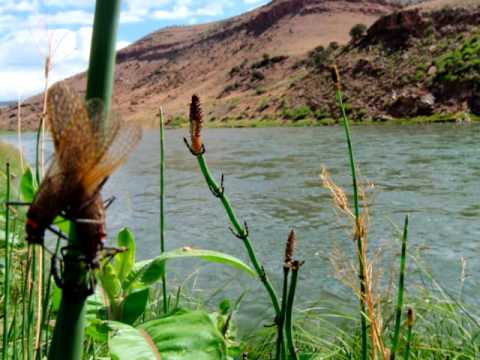 Gunnison river fly fishing report for Gunnison river fly fishing