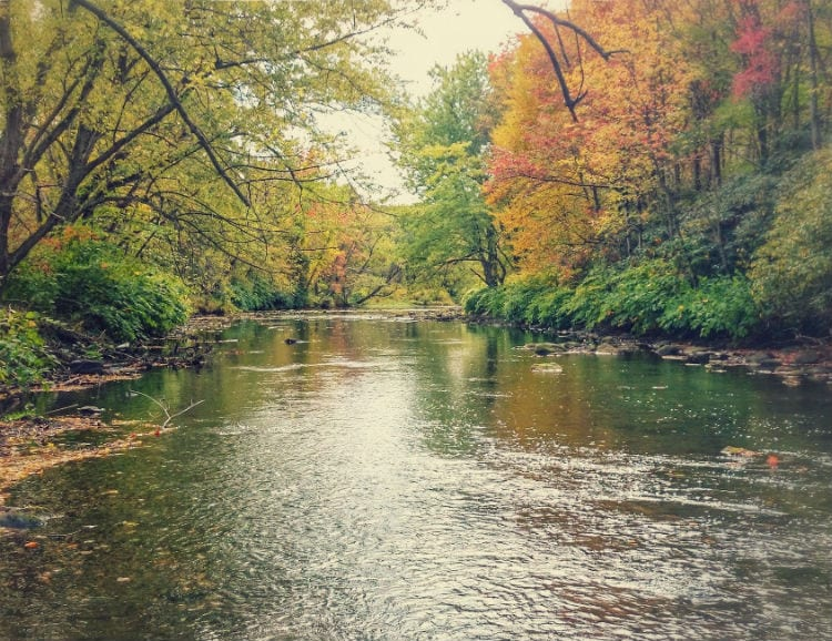Lackawanna River fly fishing