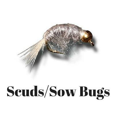 scuds sow bugs