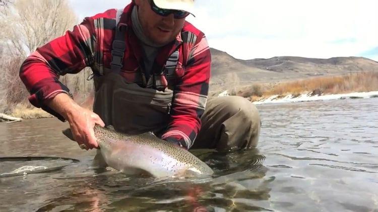 Blue River Rainbow Trout