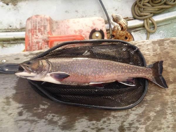kennebago lake brook trout