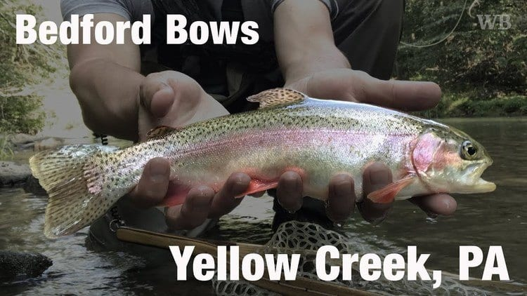 Rainbow trout caught in Yellow Creek, Bedford County, PA