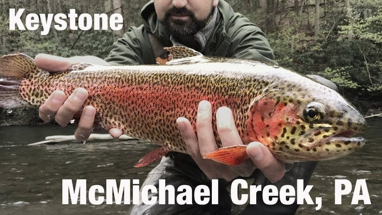 Rainbow trout caught in McMichaels Creek in Monroe County Pennsylvania