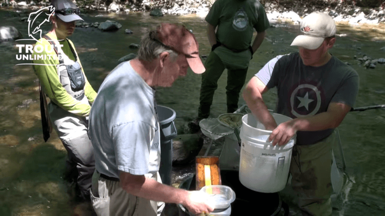 Pocono Creek electrofishing