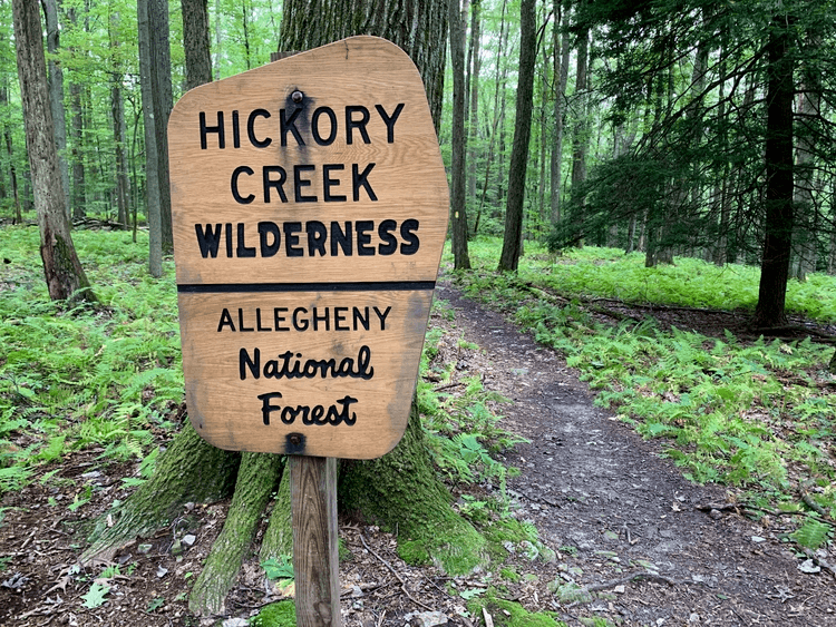 Hickory Creek Wilderness Allegheny National Forest