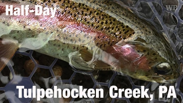 Tulphenhocken Creek rainbow trout
