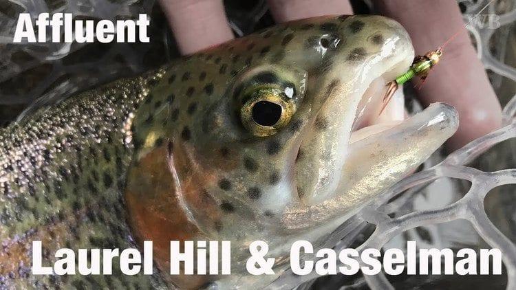 Laurel Hill Creek trout