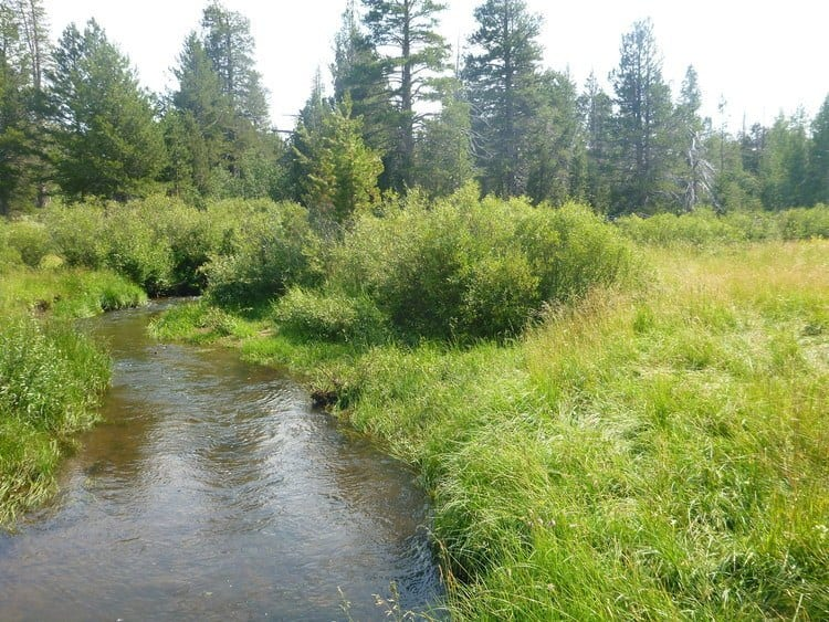 Upper Red Creek in Tolyabe National Forest in California