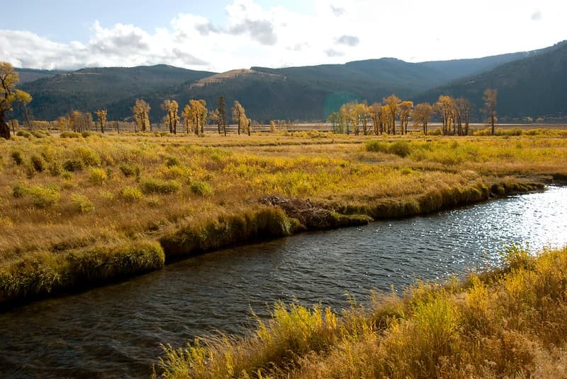Soda Butte Creek near junction with the Lamar River in Yellowstone National Park